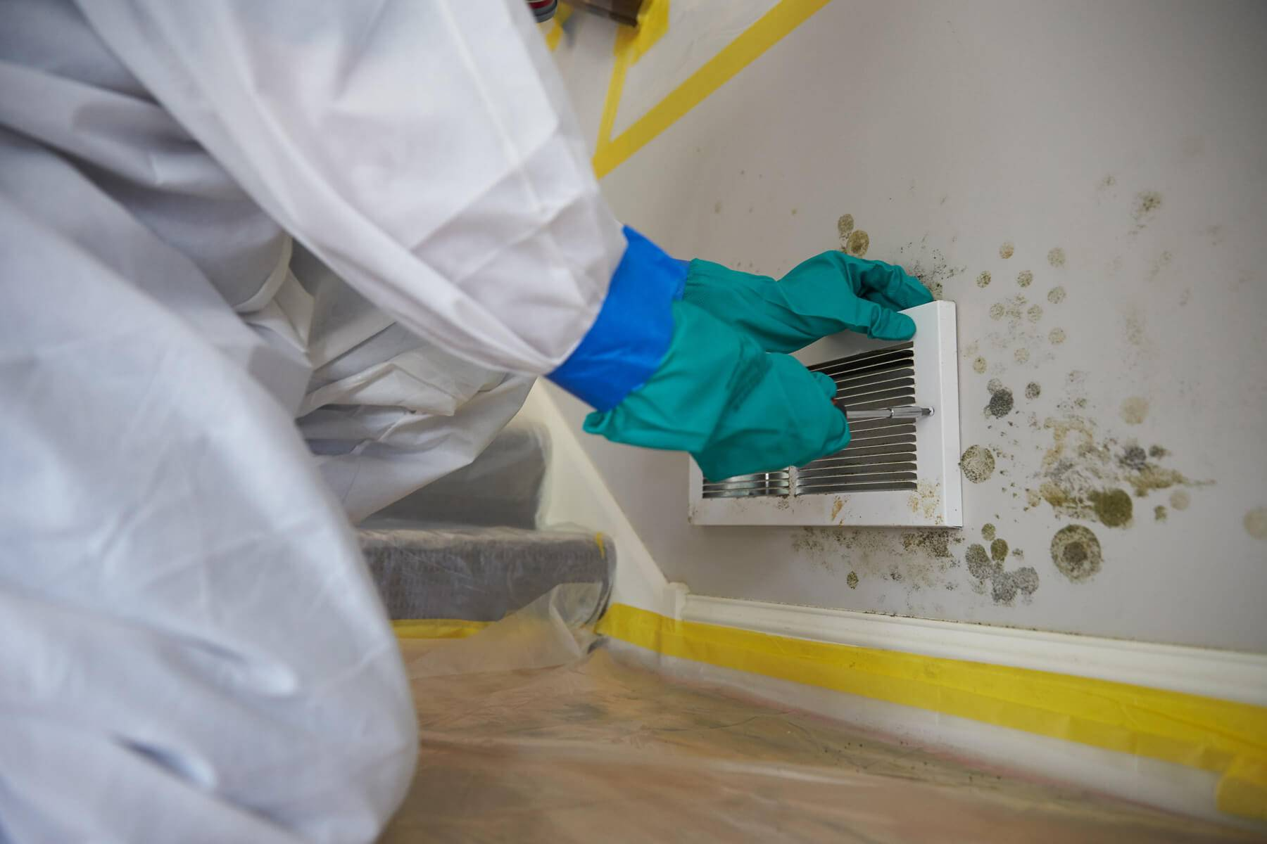 What to Expect from a Mold Removal Company